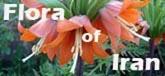 http://www.flora-iran.com